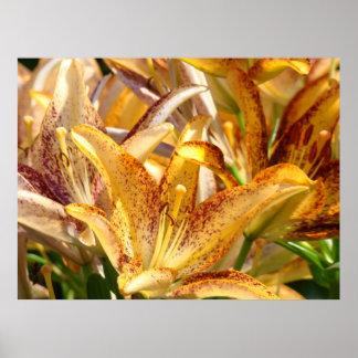 Lilies art prints framed canvas Orange Lily Flower Print