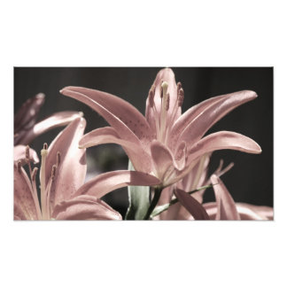 Lilies-Muted Tones Photo Print