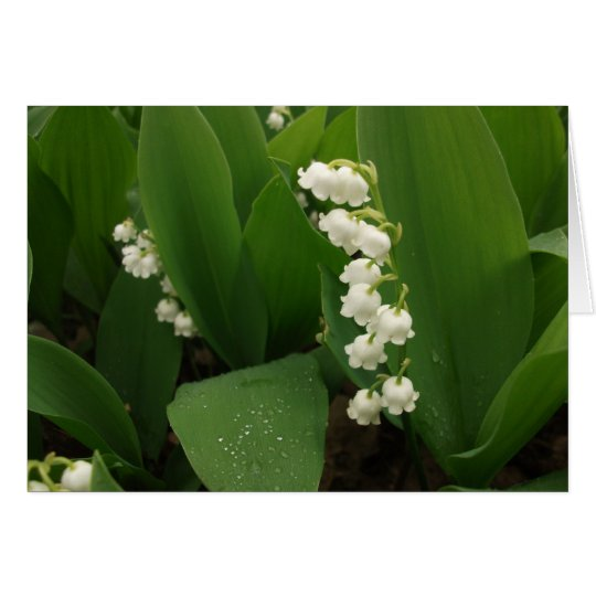 Lilies of the Valley After Rain Print Card