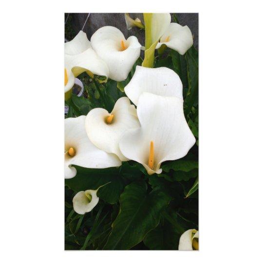 Lilies photo print
