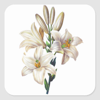 Lilium Candidum or Madonna Lily By Redoute Square Sticker
