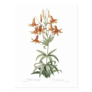 Lilium penduliflorum post card