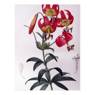 Lilium Superbum, Pierre Joseph Redouté Postcard