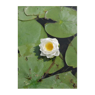 Lillie Pad Acrylic Wall Art