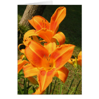 Lillies in the Morning Card