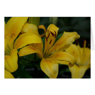 Lilly Card