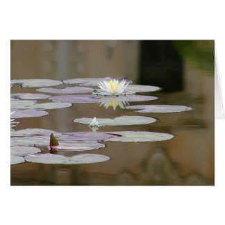 Lilly Lillies Ponds Lillypads Cards