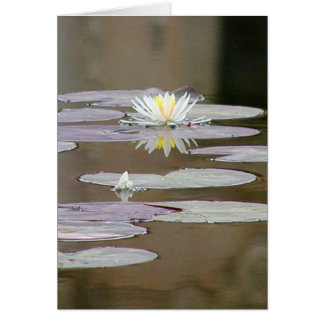Lilly Lillies Ponds Lillypads Greeting Cards