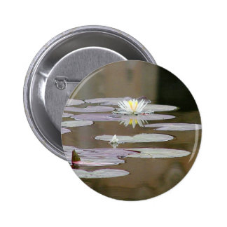 Lilly Lillies Ponds Lillypads Pinback Buttons