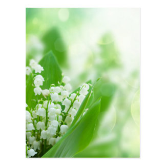 Lilly of the valley postcard