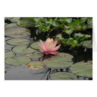 lilly pad greeting card