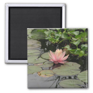lilly pad square magnet