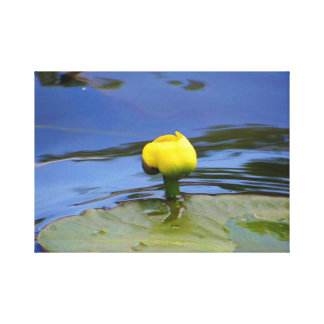 Lilly Pad Stretched Canvas Prints