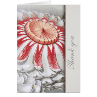 Lilly Pads Floral Thank You Notes Cards