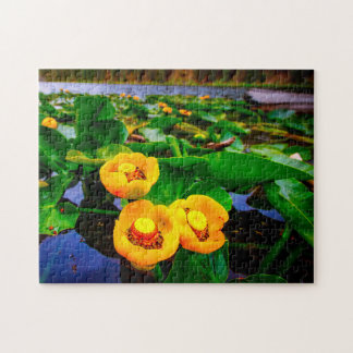 Lilly Pads. Jigsaw Puzzle