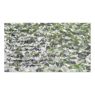 Lilly pads on a pond business card