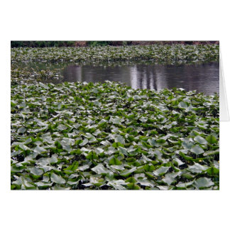 Lilly pads on a pond greeting cards