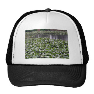 Lilly pads on a pond mesh hat