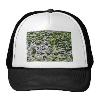 Lilly pads on a pond hat