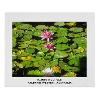Lilly pads Rainbow Jungle Poster