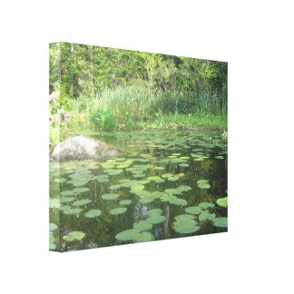 Lilly Pads Stretched Canvas Prints