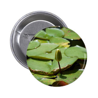 Lillypads Pin