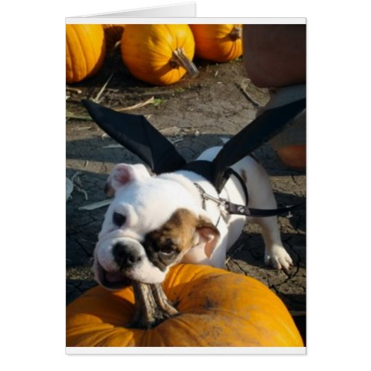 Lily at the Pumpkin Patch Card