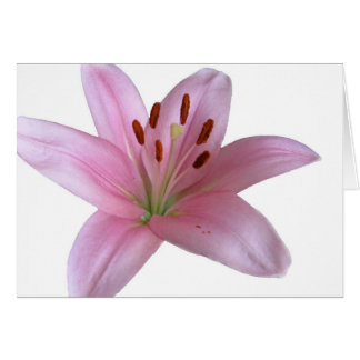 Lily - Blank greetings Card