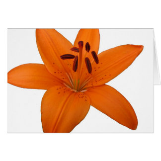 Lily Blank Greetings Card
