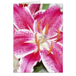 Lily Blank Inside Greeting Card