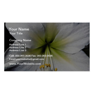 Lily close-up  flowers business card template