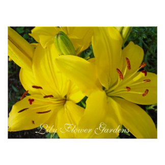 Lily Flower Gardens art prints Christmas Holiday Posters
