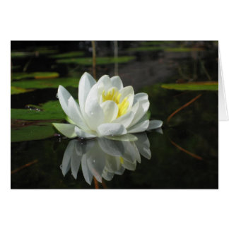 Lily Flower on Pond Blank Note Card