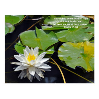 Lily in Water Post Cards