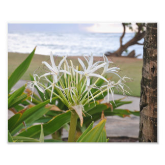Lily of Kauai Photo Print