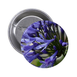 Lily of the Nile  (Agapanthus sp.) 6 Cm Round Badge