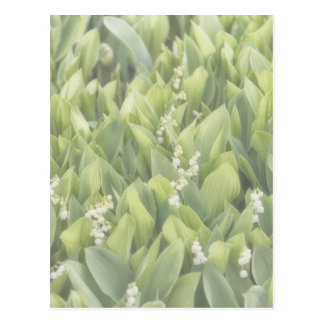 Lily of the Valley Flower Patch in Fog Postcard