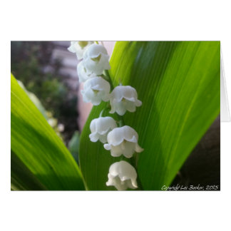 Lily-of-the-Valley Notecard