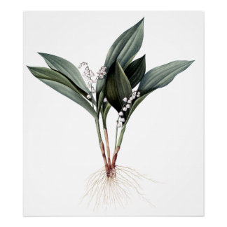 Lily of the valley premium botanical print