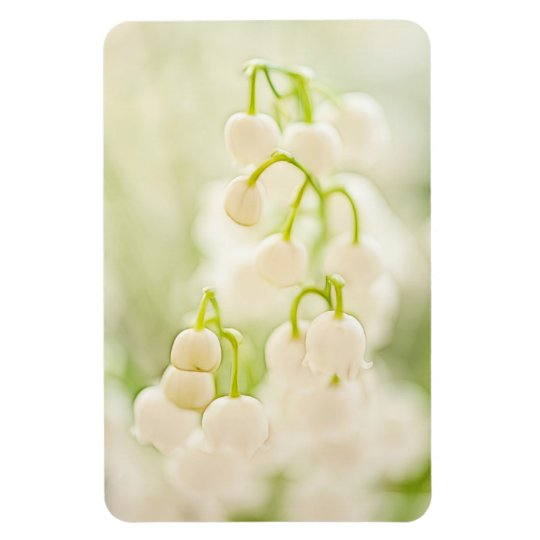Lily of the Valley Sketch Rectangular Photo Magnet