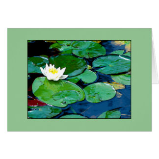 Lily Pad - Blank Card