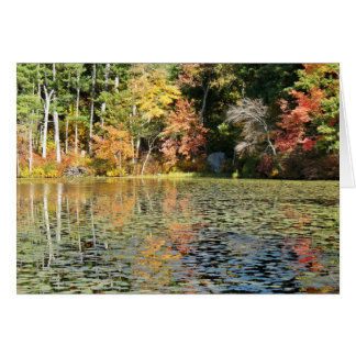 Lily Pad Cove - Whitney Pond Card