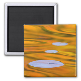 Lily pad on orange water, Canada Magnet