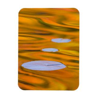 Lily pad on orange water, Canada Rectangular Photo Magnet