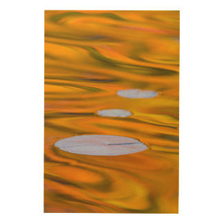 Lily pad on orange water, Canada Wood Wall Art
