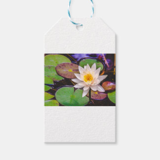 Lily pad on the water gift tags