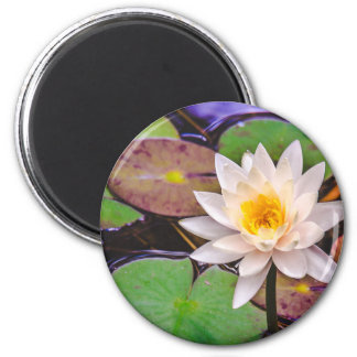 Lily pad on the water magnet