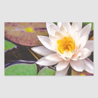 Lily pad on the water rectangular sticker