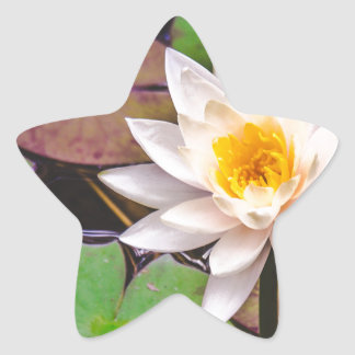Lily pad on the water star sticker