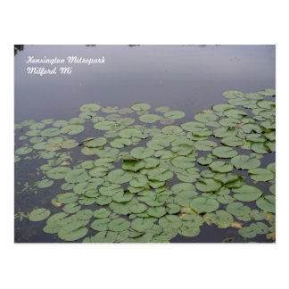 Lily Pad Postcard